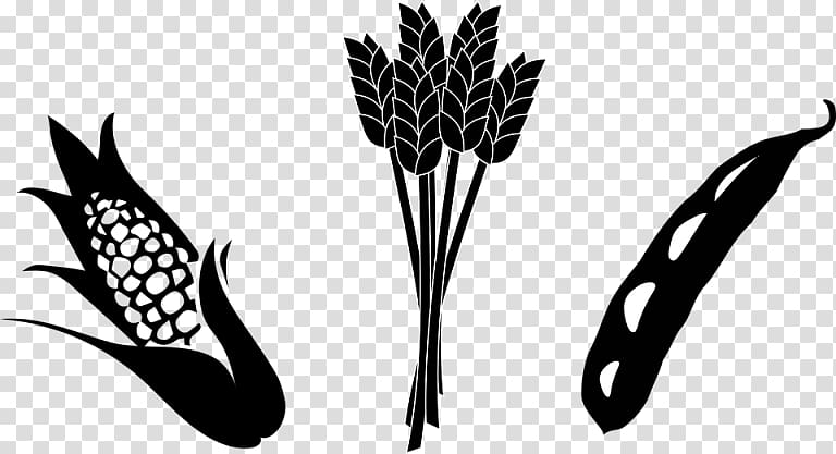Crop Agriculture Maize Soybean , Soybean Stalk transparent.