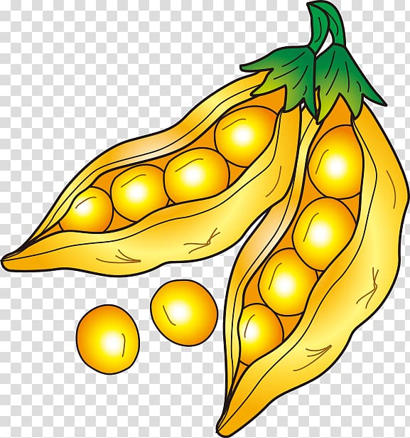 Soybean Drawing, pea transparent background PNG clipart.