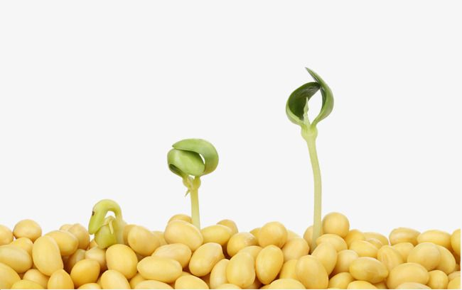 Soybean And Small Plants.