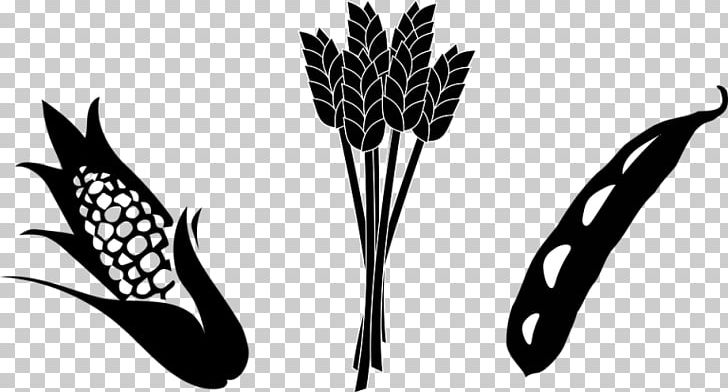 Crop Agriculture Maize Soybean PNG, Clipart, Agriculture.