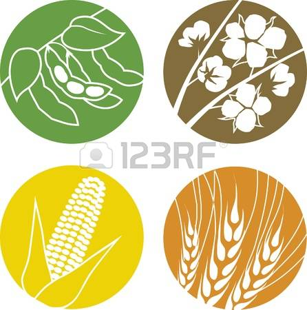 1,157 Soybeans Stock Vector Illustration And Royalty Free Soybeans.