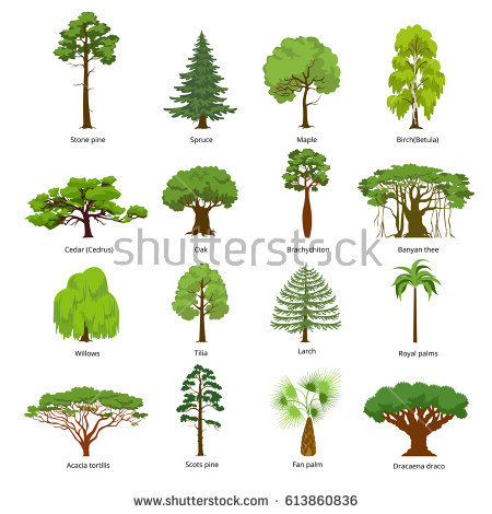 Larch Stock Images, Royalty.