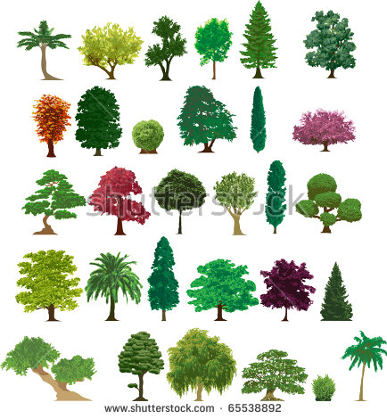 Cedar Tree Stock Images, Royalty.