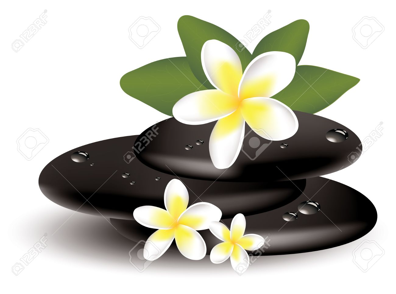Vector Frangipani Flowers And Wet Stones Royalty Free Cliparts.