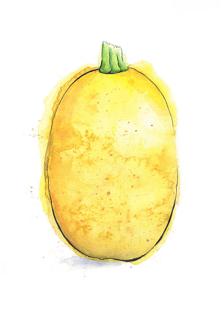 Spaghetti Squash Clip Art, Vector Images & Illustrations.