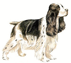 English Cocker Spaniel Clipart.