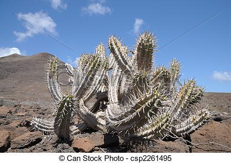 Stock Bilder von Insel, Kaktus, Spanien, kanarienvogel.