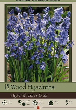 Meer dan 1000 ideeën over Hyacinthoides op Pinterest.