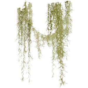 Angie's Spanish Moss.