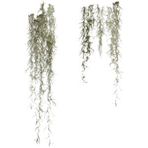 Spanish moss clipart.
