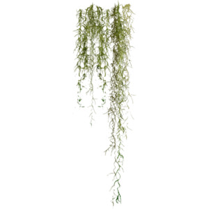 Spanish Moss Clipart 20 Free Cliparts Download Images On