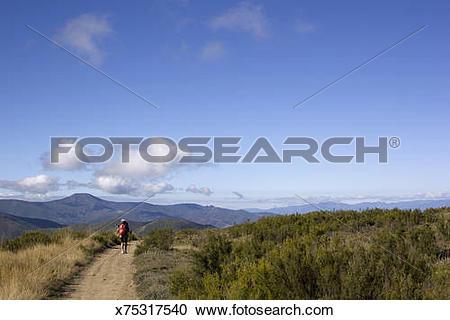 Stock Photography of Pilgrim trekker walking in the Spanish.