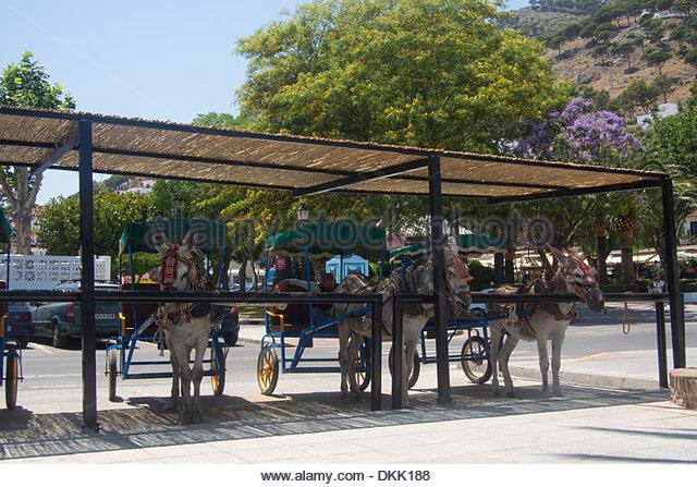 Spanish Donkey Stock Photos & Spanish Donkey Stock Images.