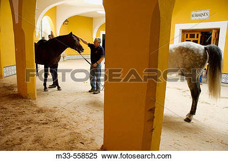 Stock Image of Thoroughbred Spanish horses at the Royal Riding.
