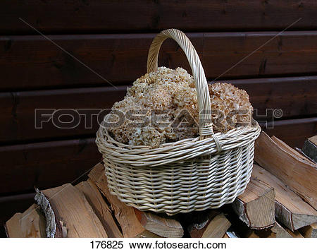 Stock Image of Basket filled with Cauliflower Mushrooms (Sparassis.