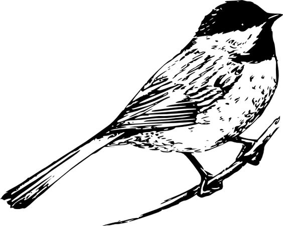 black and white pictures of birds.