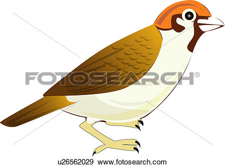 Clip Art of sparrow, birds, vertebrate, animal, bird u26562029.