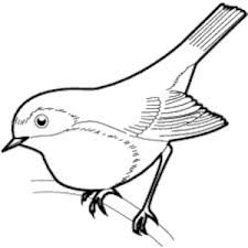 Image result for clip art of sparrow.