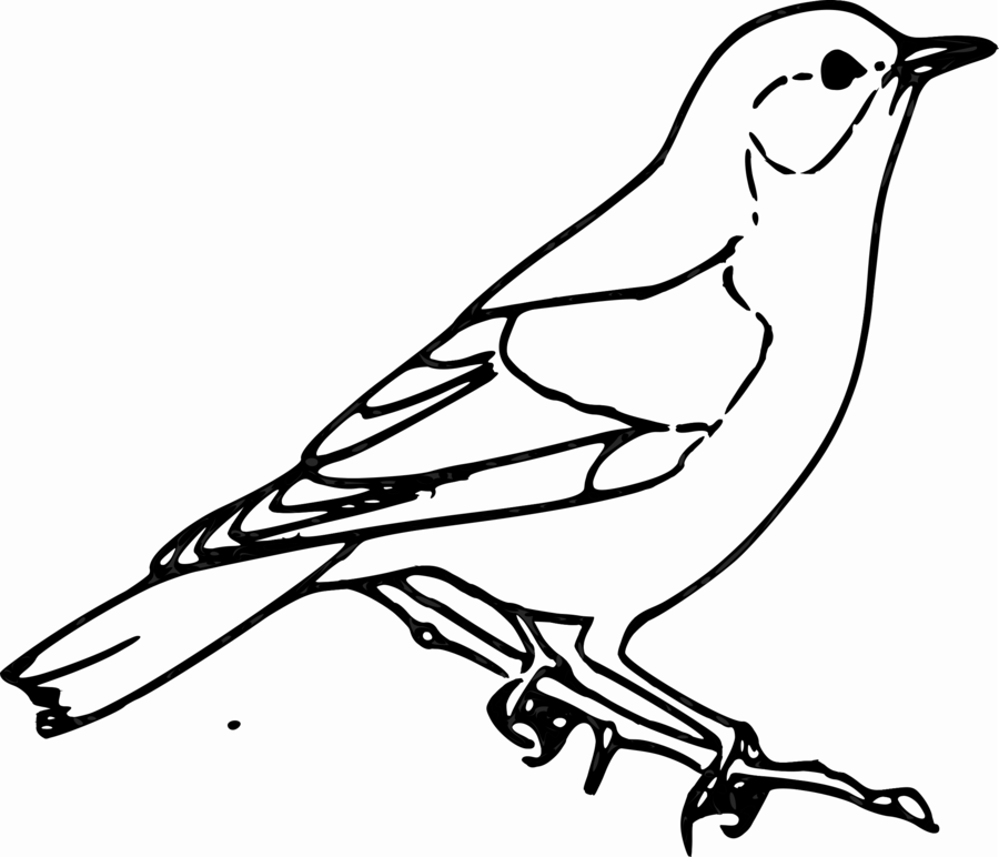 Bird Line Drawing clipart.