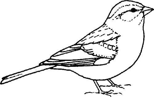 Free Sparrow Cliparts, Download Free Clip Art, Free Clip Art.