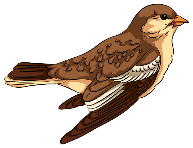 Sparrow clipart. Free download..