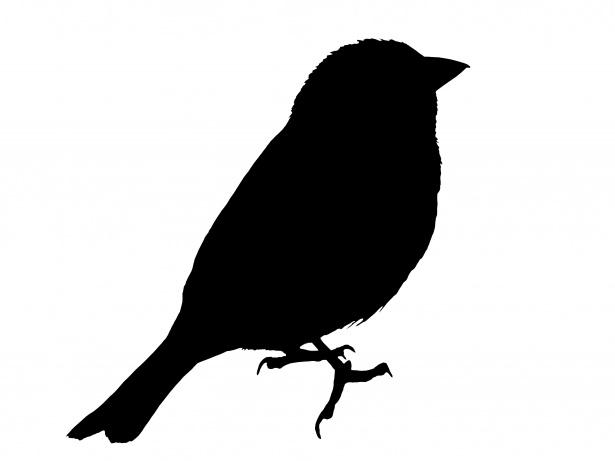 Bird Silhouette Sparrow Clipart Free Stock Photo.