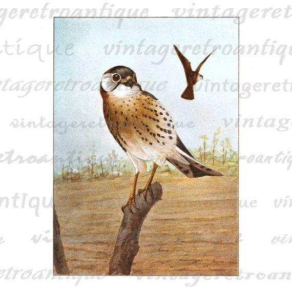 Digital Image Sparrow Hawk Graphic Color Bird Illustration.