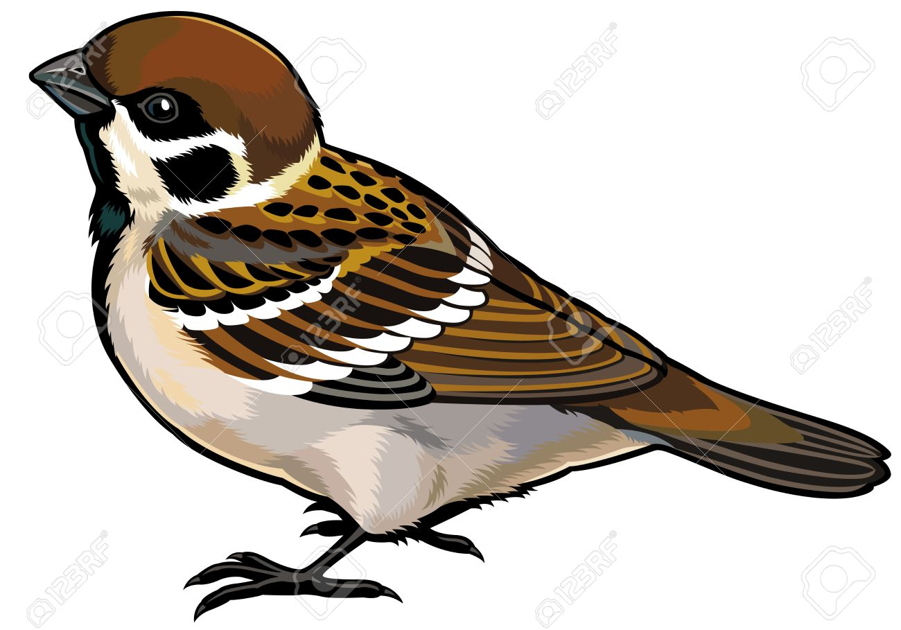 5,505 Sparrow Cliparts, Stock Vector And Royalty Free Sparrow.