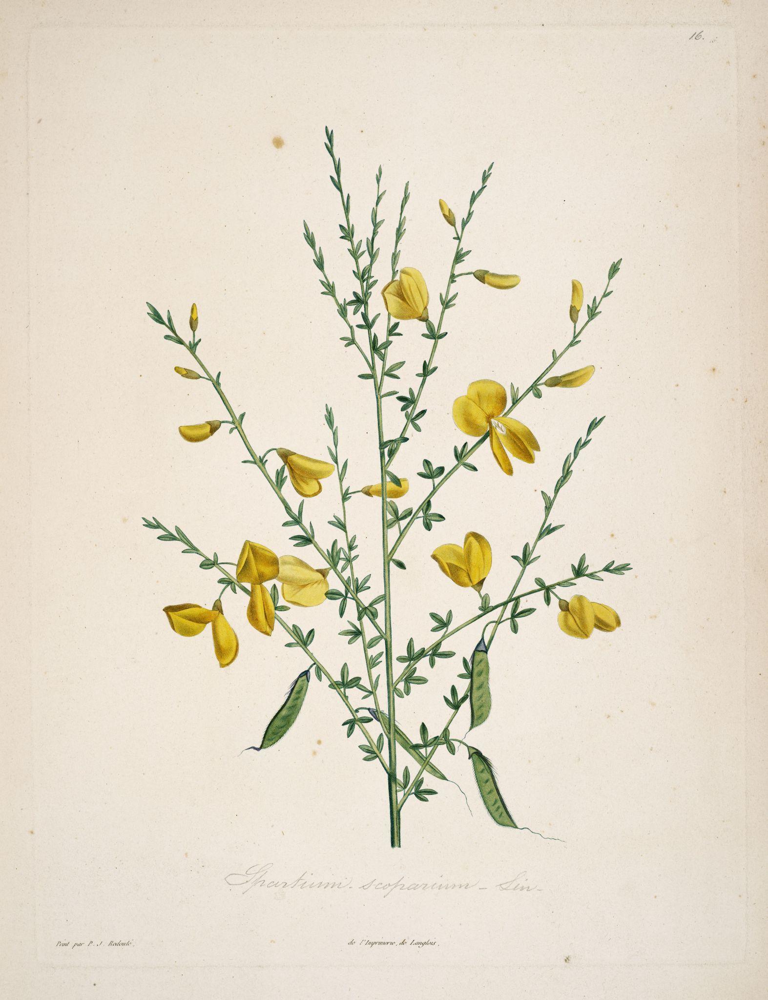 gravures botanique Rousseau.