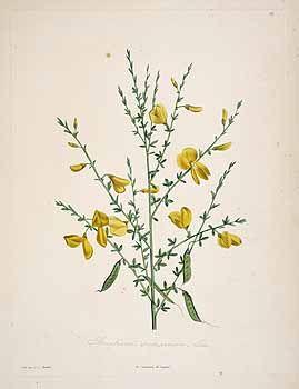 1000+ ideas about La Botanique on Pinterest.