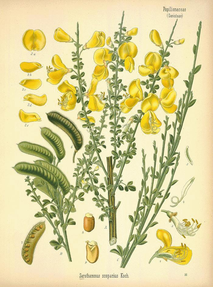 A Modern Herbal.