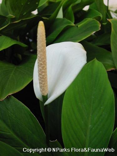 Flora Fauna Web.