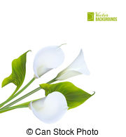 Spathiphyllum Clipart and Stock Illustrations. 7 Spathiphyllum.