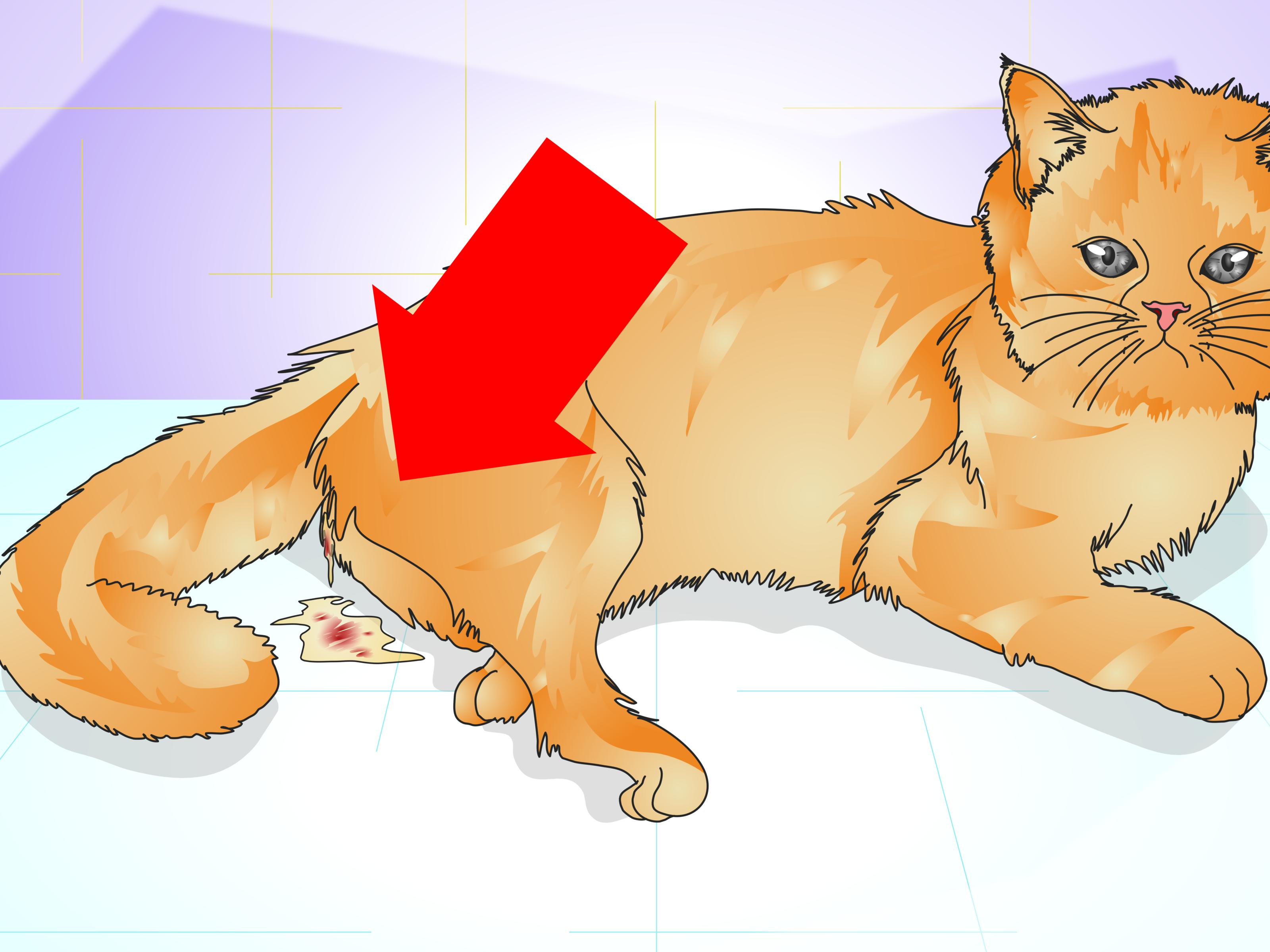 How to Tell if a Cat Is Spayed: 12 Steps (with Pictures).