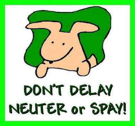 Spay/Neuter Information.