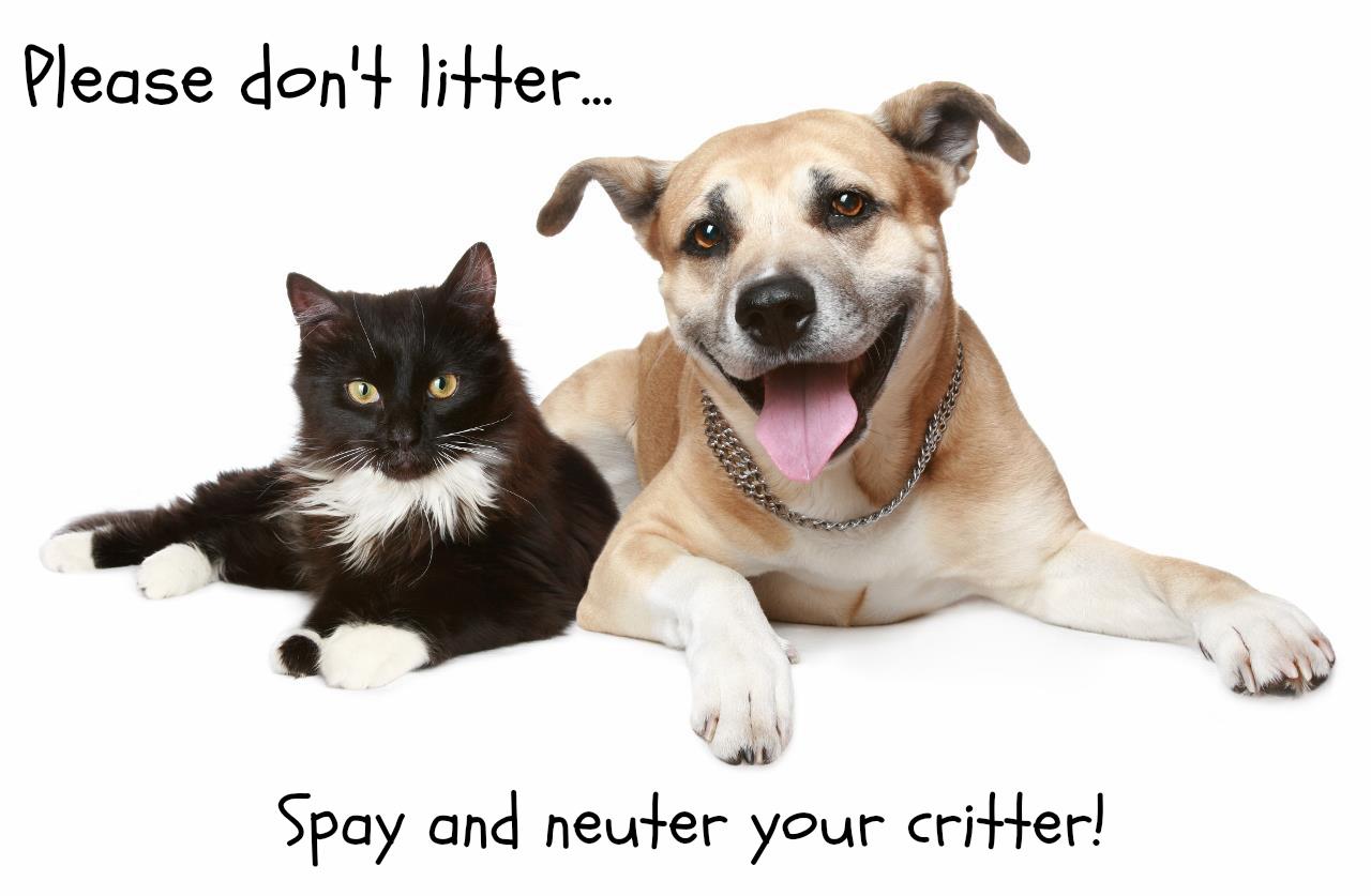 Spay Pet Clipart.