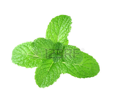 627 Fresh Spearmint Stock Vector Illustration And Royalty Free.