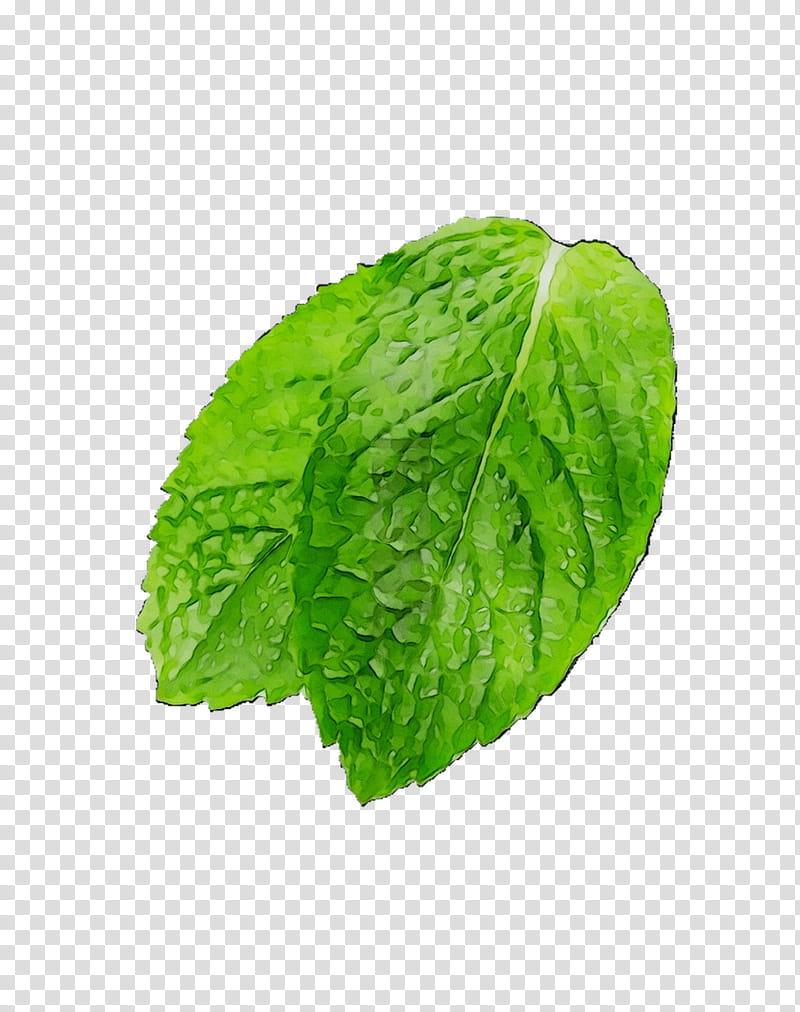 Mint Leaf, Romaine Lettuce, Spring Greens, Herbalism, Plant.