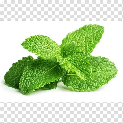 Peppermint Mentha spicata Apple Mint Mint leaf, Leaf.