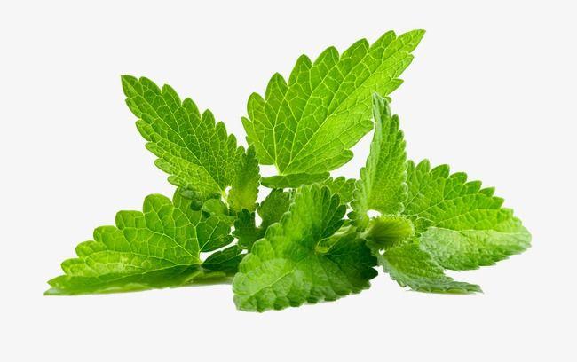 Green Mint Leaves, Mint Leaves, Mint, Green Leaves PNG.