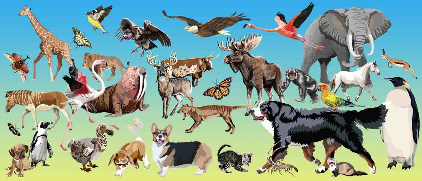 Animals Clip Art.