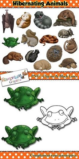 1000+ ideas about Hibernating Animals on Pinterest.