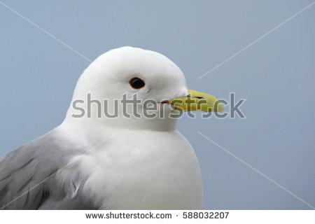 Seabird Stock Photos, Royalty.