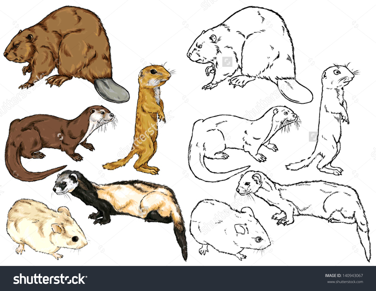 Drawing Contour Wild Animal Species Living Stock Vector 140943067.