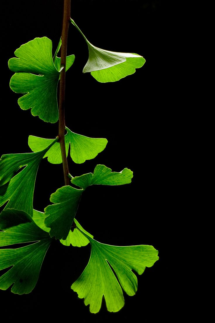 1000+ images about Botanical illustration on Pinterest.