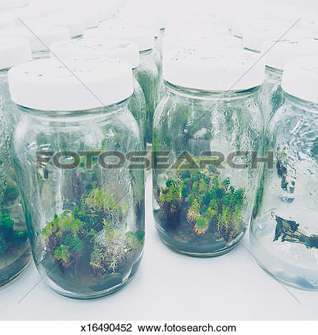 Stock Photo of Large Group of Specimen Jars Containing Plants and.