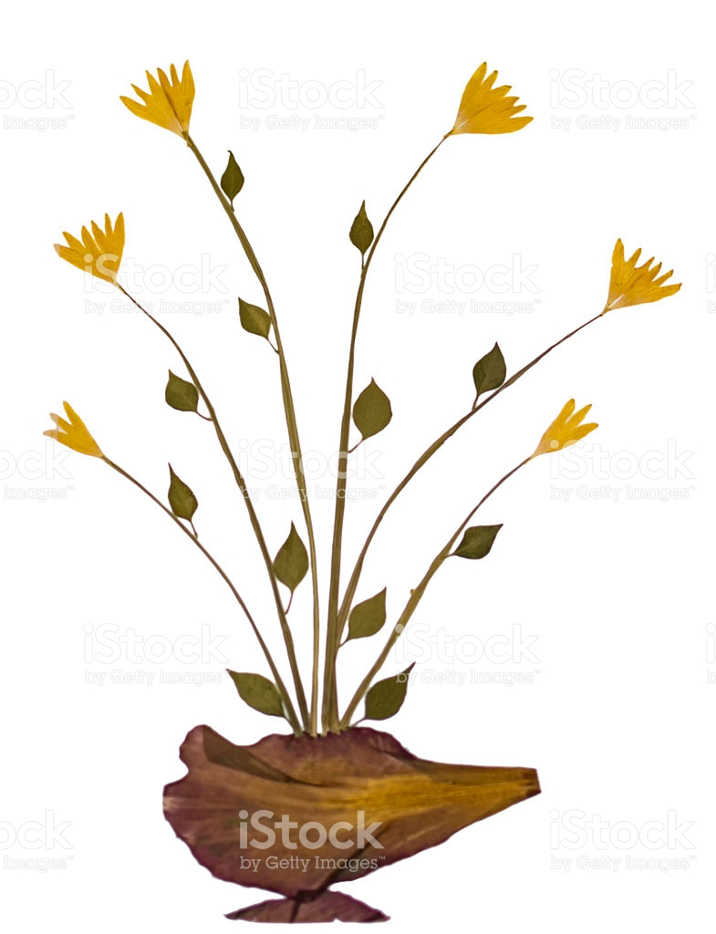 Dry Sample Flower Specimen stock photo 543443570.