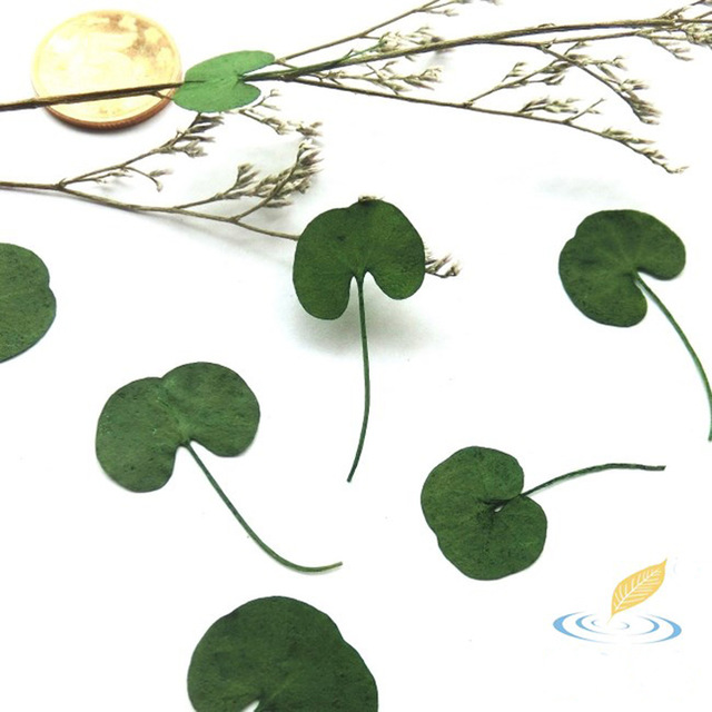 Aliexpress.com : Buy 20 Pcs One Side Colored Dried Leaves Mini.
