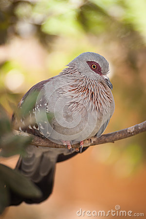 Speckled Pigeon Sitting On White Wall In Front Of Greenery Royalty.