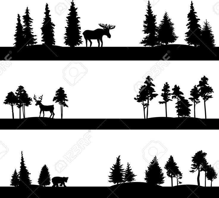 1000+ ideas about Coniferous Trees on Pinterest.